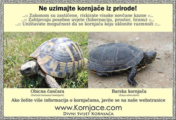 Ne uzimajte kornjace iz divljine