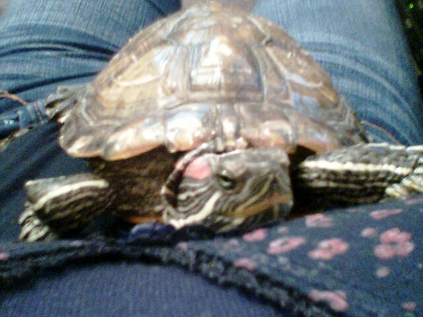 moja kornjača