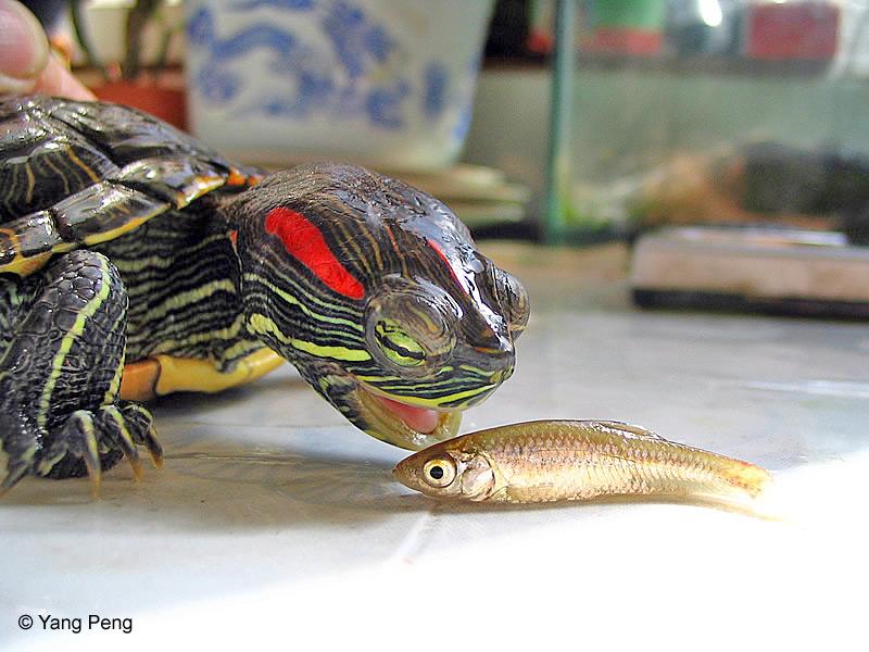 Najljepša slika kornjaće