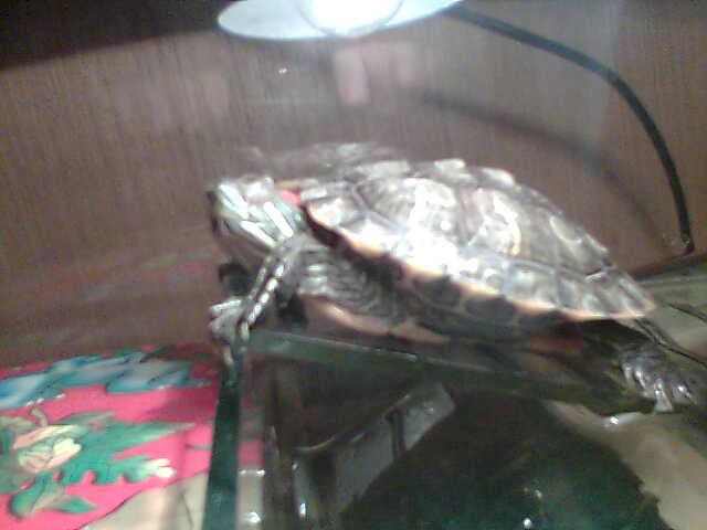 Moja kornjaca