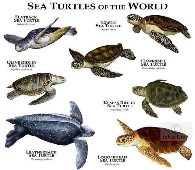 Morske kornjace